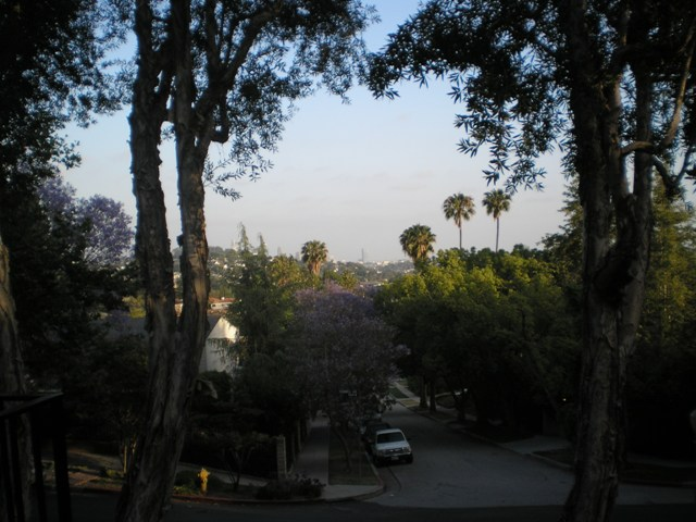 the view from hollywood hills