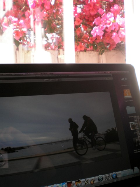 Movie on computer with flowers behind through an open window