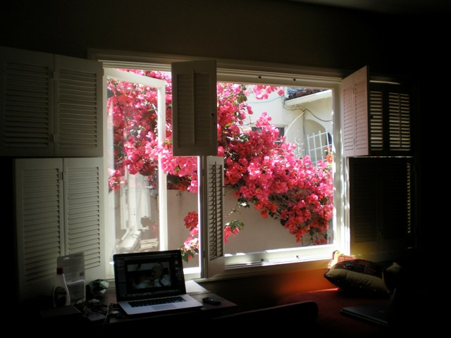 Window with purple flowers in Long Beach