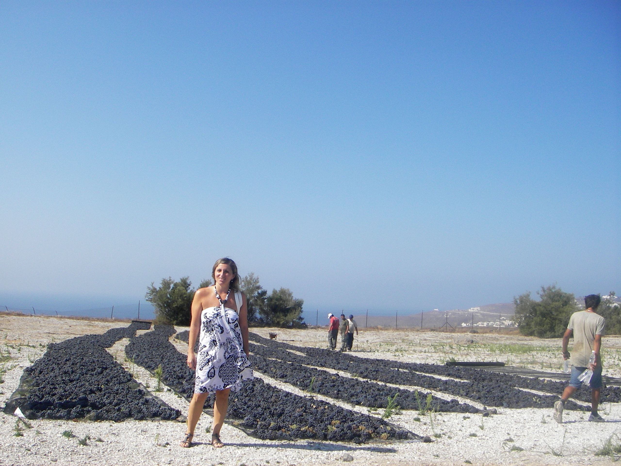 Among the grape-drying fields in Mesa Gonia, Santorini