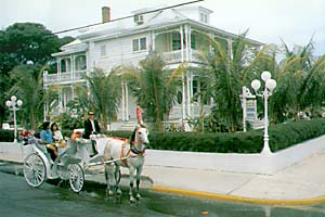 southernmost key west horses